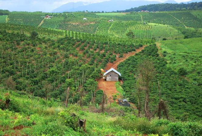 Nghị quyết về Chủ trương chuyển đổi mục đích sử dụng rừng sang mục đích khác năm 2020 trên địa bàn tỉnh
