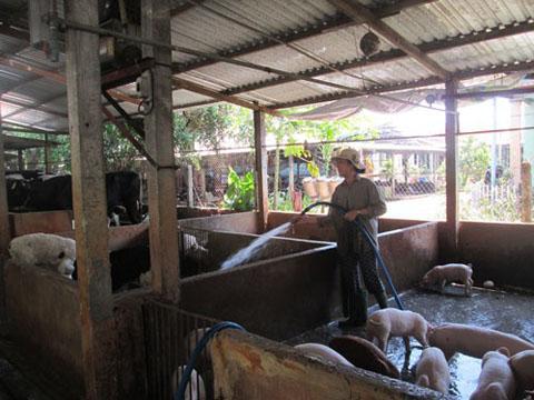 Nghị định mới xử phạt vi phạm hành chính về chăn nuôi